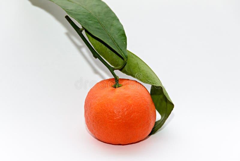 Το πορτοκαλί reticulata εσπεριδοειδών κινεζικής γλώσσας με τα πράσινα φύλλα, κλείνει επάνω στοκ φωτογραφία