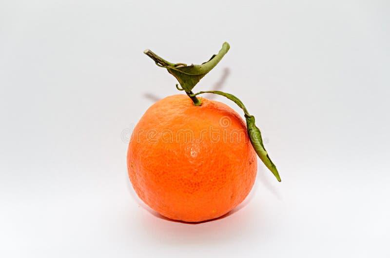 Το πορτοκαλί reticulata εσπεριδοειδών κινεζικής γλώσσας με τα πράσινα φύλλα, κλείνει επάνω στοκ εικόνες με δικαίωμα ελεύθερης χρήσης