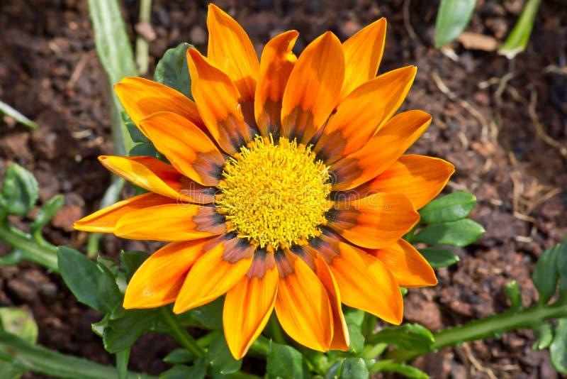 Το πορτοκαλί σύνολο λουλουδιών στοκ φωτογραφία