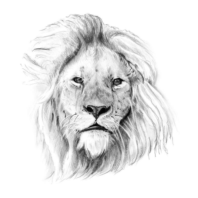 Το πορτρέτο του λιονταριού που σύρεται κοντά παραδίδει το μολύβι διανυσματική απεικόνιση