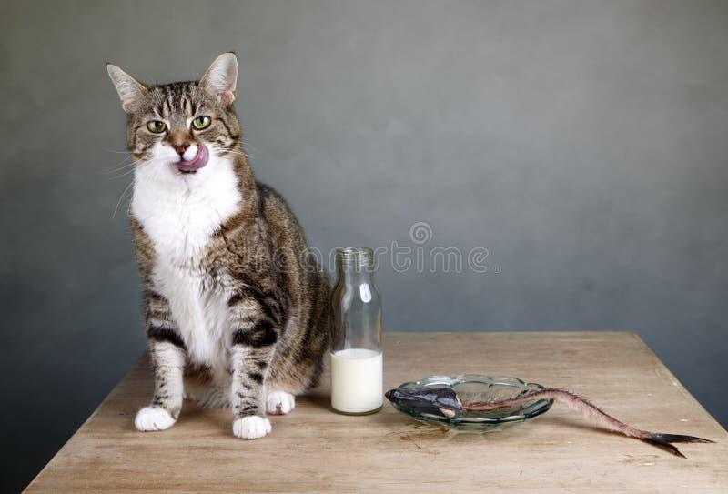 Γάτα και ρέγγες στοκ φωτογραφία με δικαίωμα ελεύθερης χρήσης