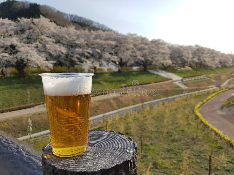 Το ποτήρι της μπύρας στην ξύλινη επιτραπέζια καρέκλα στο δέντρο ανθών κερασιών sakura σταθμεύει δημόσια την Ιαπωνία στοκ εικόνα με δικαίωμα ελεύθερης χρήσης