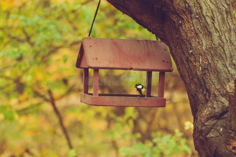 Το πουλί έχει φθάσει και κάθεται στον τροφοδότη πουλιών στοκ φωτογραφία