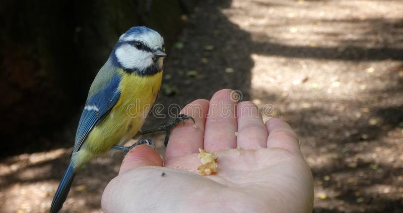 Το πουλί ήρθε για φαγητό στοκ φωτογραφίες