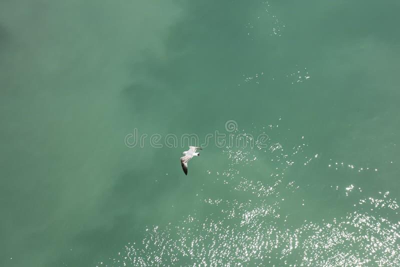 Το πουλί θάλασσας κοντά σε μακρο θερινά αφηρημένα πενήντα megapixels πορθμείων κανένα εκδίδει στοκ φωτογραφία με δικαίωμα ελεύθερης χρήσης