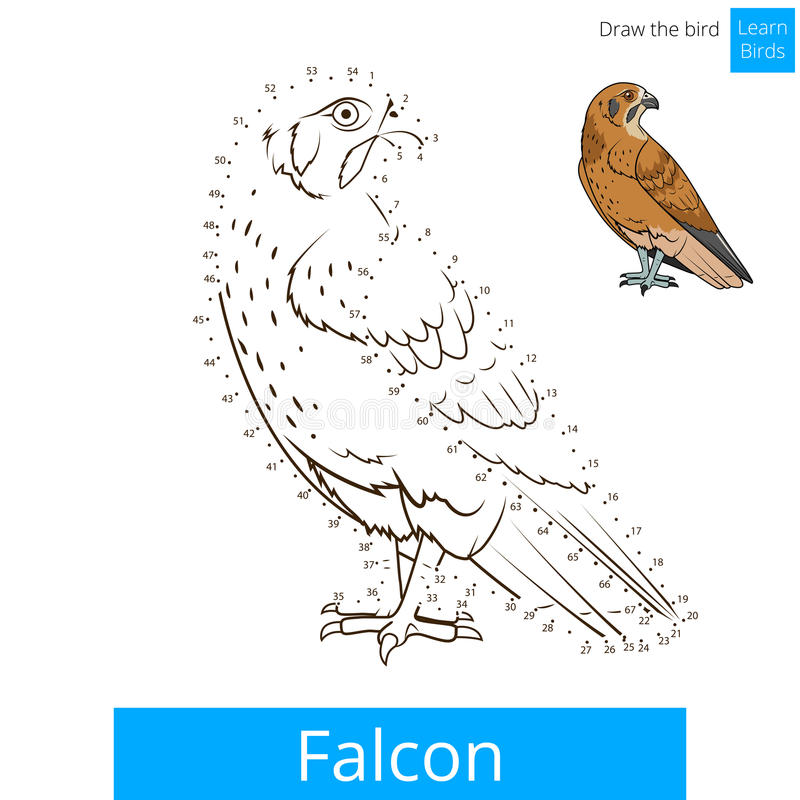 Το πουλί γερακιών μαθαίνει τα πουλιά χρωματίζοντας το διάνυσμα βιβλίων ελεύθερη απεικόνιση δικαιώματος