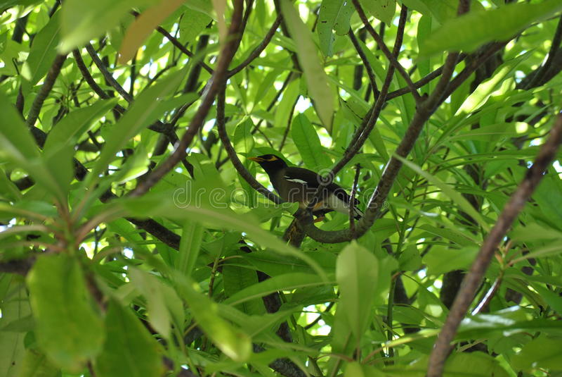 Το πουλί σε πράσινο βγάζει φύλλα στοκ φωτογραφίες