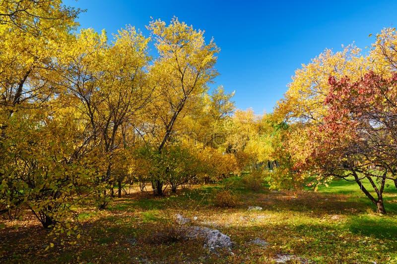 Download Το πολύχρωμο φθινόπωρο στοκ εικόνες. εικόνα από περιοχή - 62711144