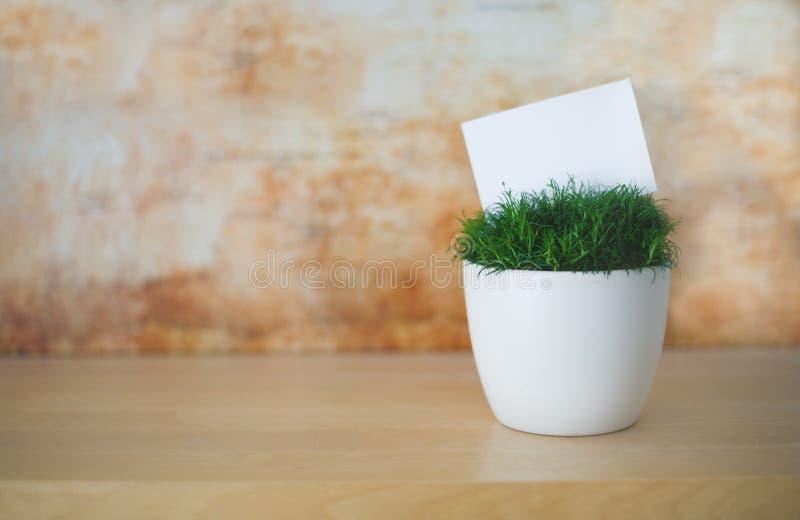 Το πράσινο λουλούδι στο άσπρο δοχείο με το άσπρο μικρό έγγραφο ως θέση για το κείμενό σας αφηρημένο πορτοκάλι ανασκόπησης στοκ εικόνες