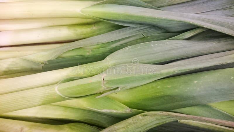 Το πράσο είναι ένα λαχανικό, μια ποικιλία Allium του ampeloprasum, το άγριο πράσο πλατύφυλλων στοκ εικόνα με δικαίωμα ελεύθερης χρήσης