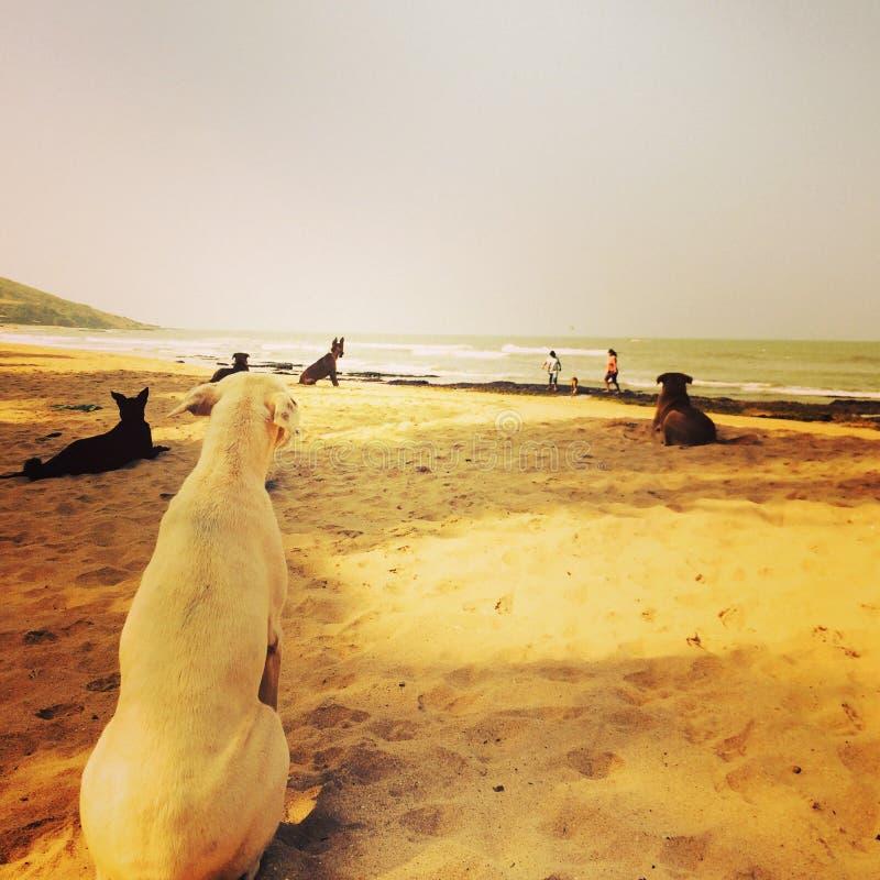 Το πρωί στην παραλία στοκ εικόνες