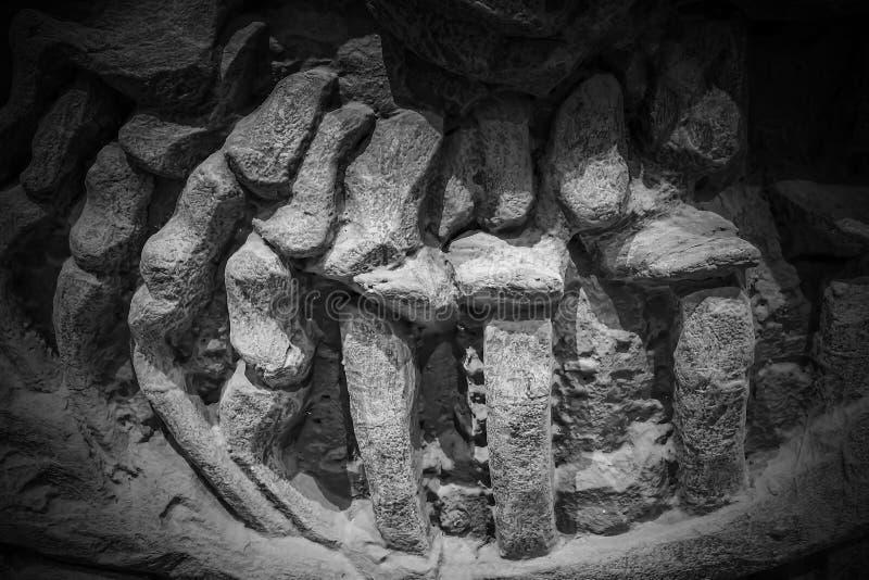 Το πρότυπο απολίθωμα δεινοσαύρων, δεινόσαυροι είναι διαφορετική ομάδ στοκ φωτογραφίες