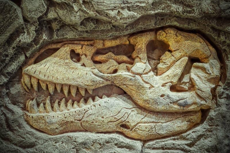 Το πρότυπο απολίθωμα δεινοσαύρων, δεινόσαυροι είναι διαφορετική ομάδ στοκ φωτογραφίες με δικαίωμα ελεύθερης χρήσης