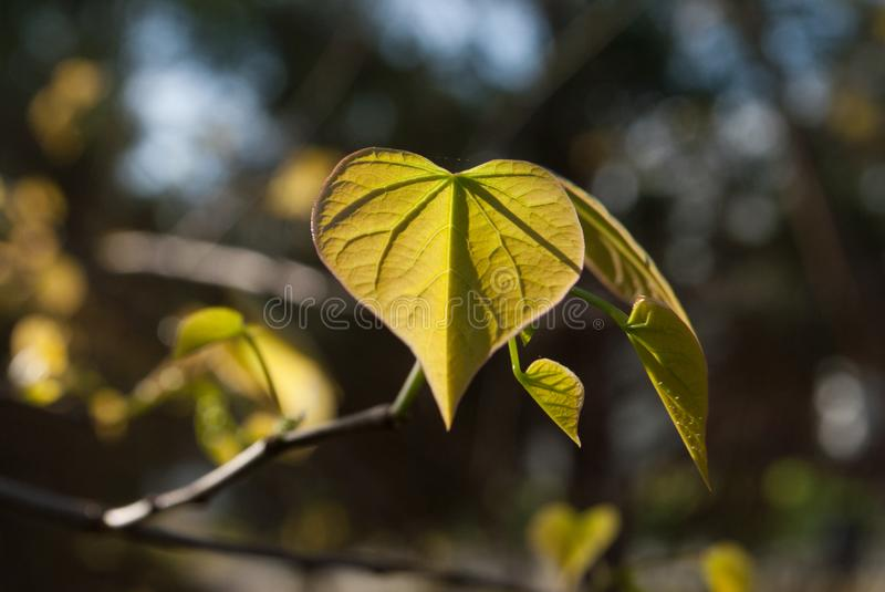 Το πρώτο πράσινο της φύσης είναι χρυσό στοκ εικόνες