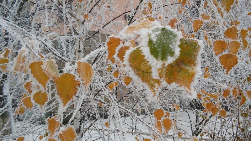 Το πρώτο χιόνι στοκ εικόνα με δικαίωμα ελεύθερης χρήσης