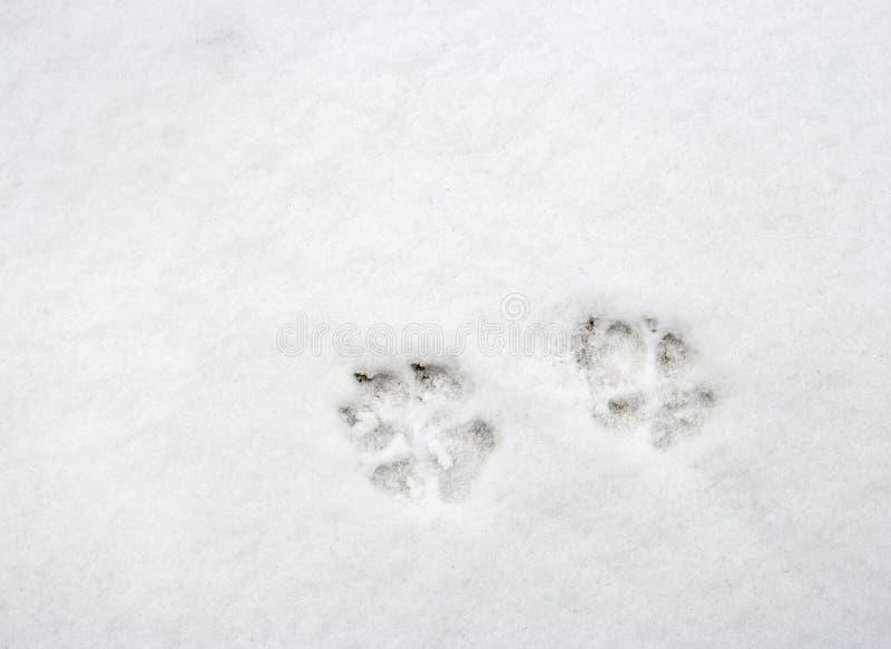 το πόδι σκυλιών τυπώνει το s στοκ εικόνες με δικαίωμα ελεύθερης χρήσης