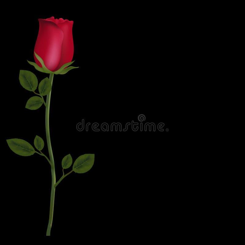 Το ρεαλιστικό λουλούδι του κοκκίνου αυξήθηκε απομονωμένος στο μαύρο υπόβαθρο με το διάστημα αντιγράφων ελεύθερη απεικόνιση δικαιώματος