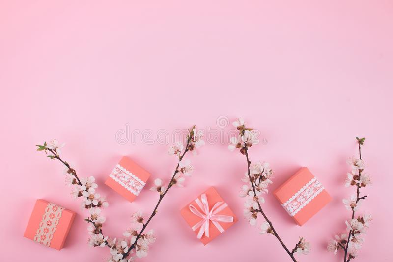 Το ρόδινο επίπεδο βάζει με τα κιβώτια δώρων δαντελλών και τα ανθίζοντας λουλούδια sakura κερασιών στο ροδαλό υπόβαθρο Θηλυκό εορτ στοκ εικόνες