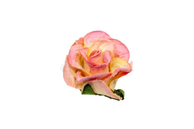 Το ρόδινο και κίτρινο έγγραφο αυξήθηκε λουλούδι για που απομονώθηκε στο άσπρο υπόβαθρο στοκ φωτογραφίες