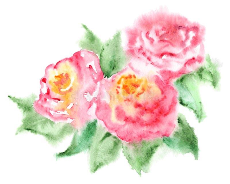 Το ρόδινο τσάι Watercolor αυξήθηκε floral σύνθεση λουλουδιών διανυσματική απεικόνιση