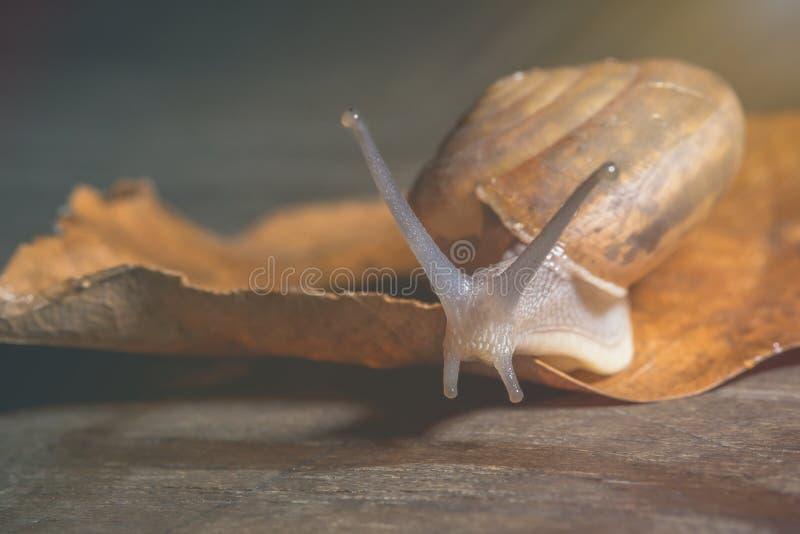 Το σαλιγκάρι κινείται αργά προς τον προορισμό στοκ εικόνες