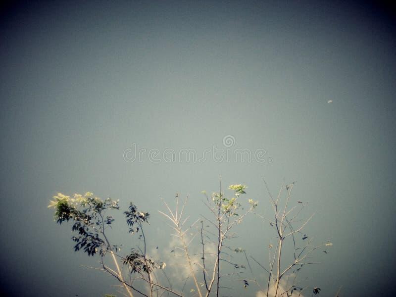 Το σαφές δέντρο ουρανού ολοκληρώνει τα φύλλα στοκ εικόνες