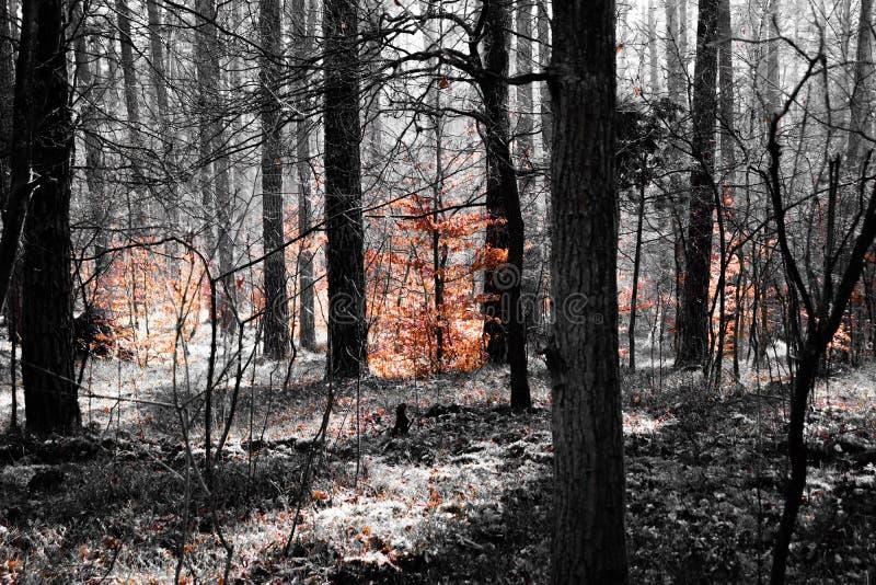 Το σκοτεινό δάσος με το πορτοκάλι βγάζει φύλλα στοκ εικόνες με δικαίωμα ελεύθερης χρήσης