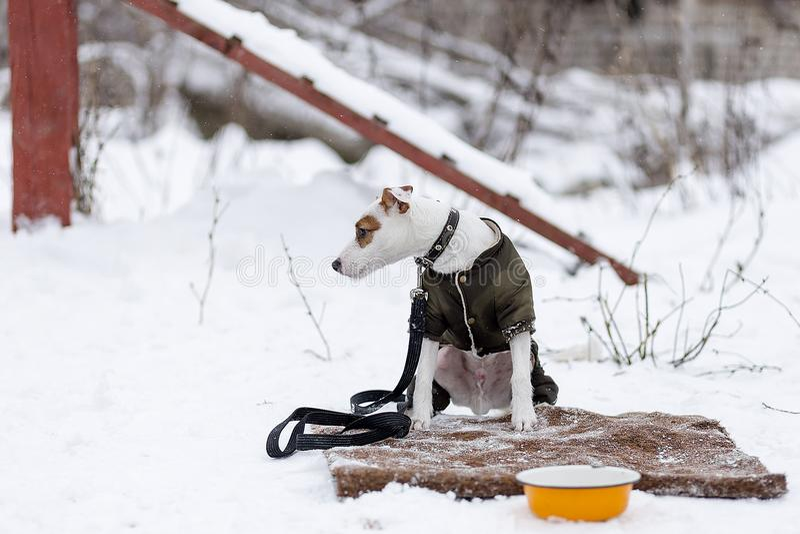 Το σκυλί αρνείται να φάει στοκ εικόνες