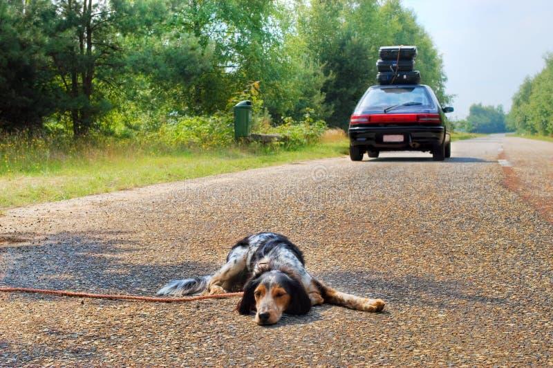 το σκυλί δεν φεύγει στοκ εικόνα
