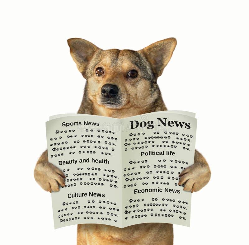 Το σκυλί διαβάζει μια εφημερίδα στοκ φωτογραφία με δικαίωμα ελεύθερης χρήσης