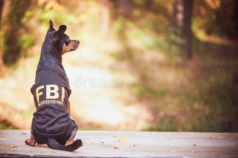 Το σκυλί είναι αξιωματούχος του FBI Αστείο τεριέ παιχνιδιών κουταβιών στη FBI κοστουμιών _ στοκ φωτογραφία