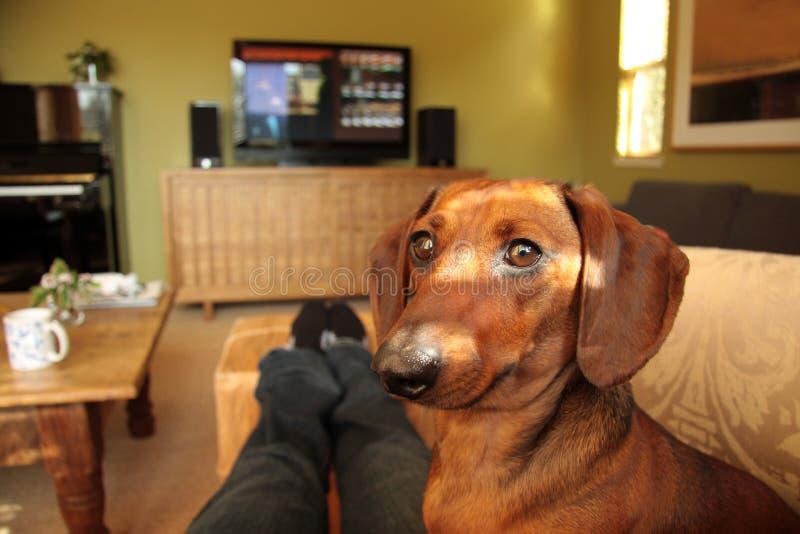 το σκυλί κοιτάζει επίμον& στοκ φωτογραφία με δικαίωμα ελεύθερης χρήσης