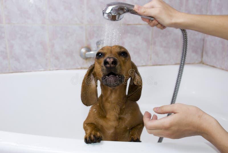 το σκυλί λουτρών έχει στοκ φωτογραφία