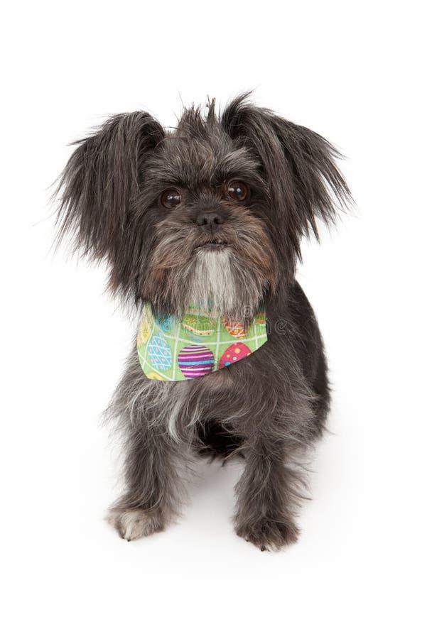 το σκυλί Πάσχα διασταύρωσης bandana η φθορά στοκ εικόνες