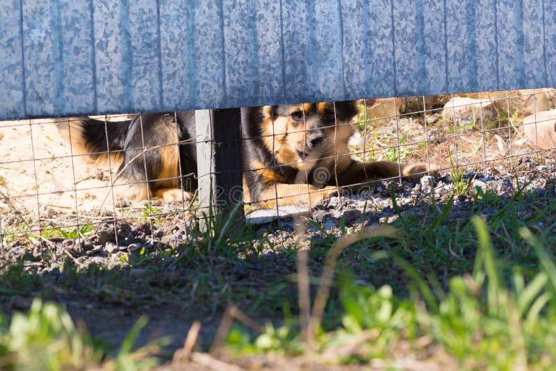 Το σκυλί πίσω από το φράκτη στοκ φωτογραφία