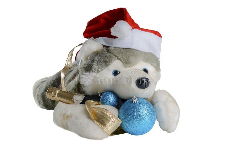Το σκυλί στο καπέλο Άγιου Βασίλη που περιμένει τα Χριστούγεννα, απομονώνει στο άσπρο υπόβαθρο στοκ εικόνες