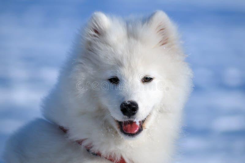 το σκυλί στοκ εικόνα με δικαίωμα ελεύθερης χρήσης