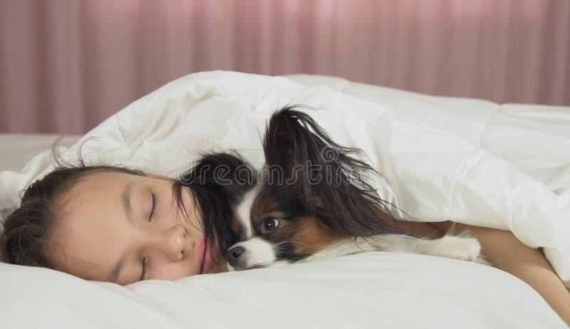 Το σκυλί Papillon ξυπνά το κορίτσι εφήβων στο κρεβάτι στοκ φωτογραφία με δικαίωμα ελεύθερης χρήσης