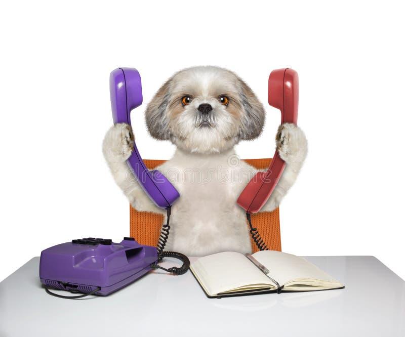 Το σκυλί μιλά πάνω από δύο τηλέφωνα στοκ εικόνα