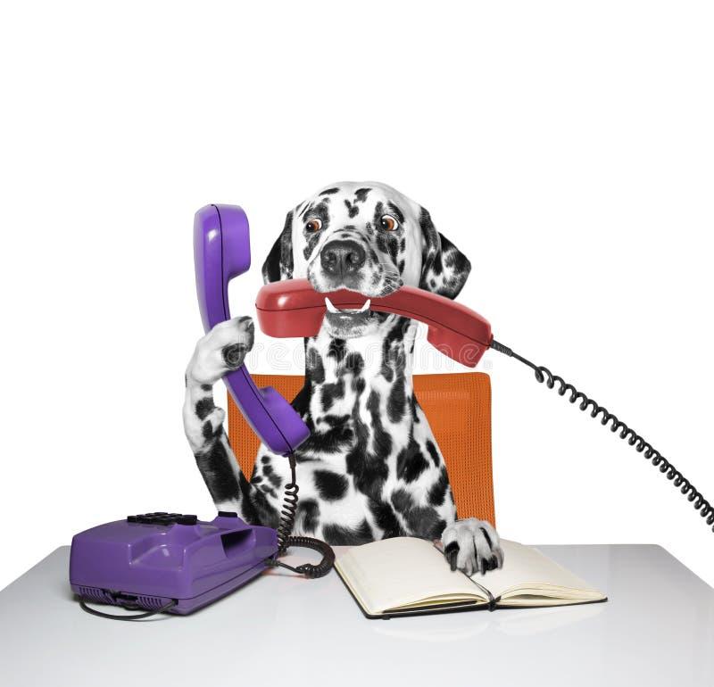 Το σκυλί μιλά πέρα από το τηλέφωνο στοκ εικόνα