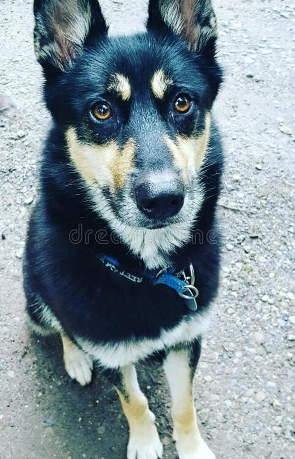 Το σκυλί μου στοκ εικόνες με δικαίωμα ελεύθερης χρήσης
