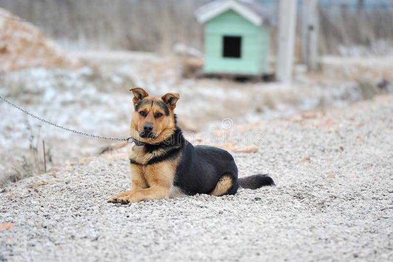 Το σκυλί ναυπηγείων κάθεται δεμένος στοκ εικόνες