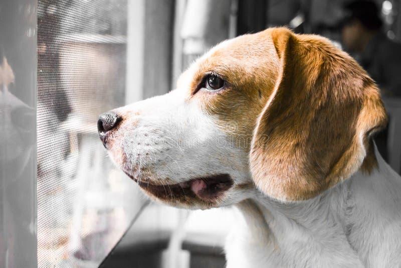 Το σκυλί περιμένει τον ιδιοκτήτη του στοκ εικόνα