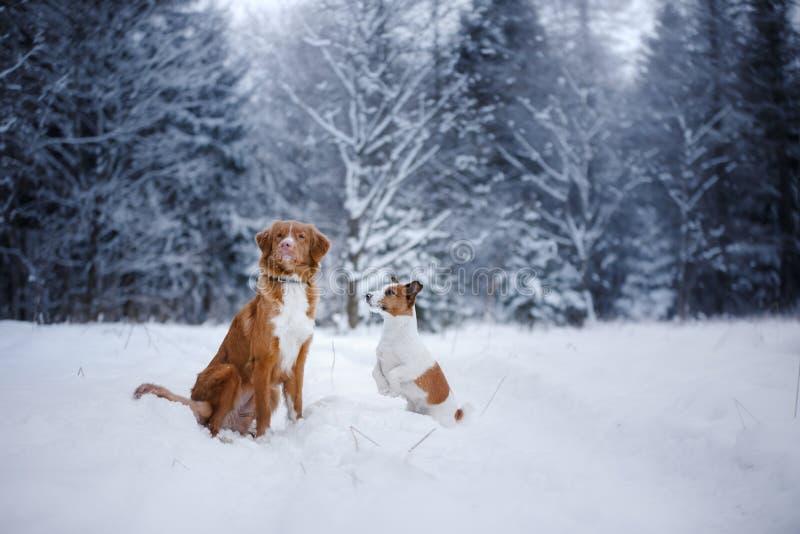 Το σκυλί στο δάσος, το χειμώνα, αυτό χιονίζει στοκ φωτογραφία