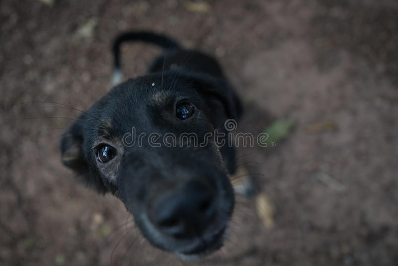 Το σκυλί στο ναό στοκ φωτογραφία με δικαίωμα ελεύθερης χρήσης