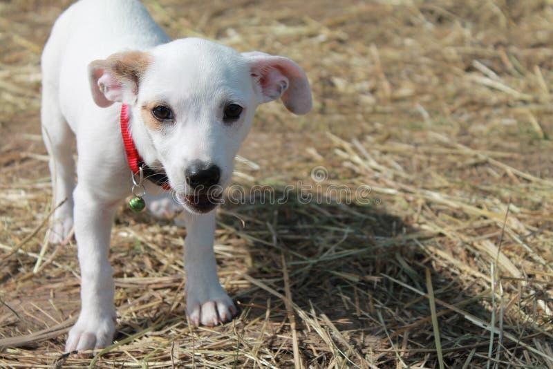 Το σκυλί Cutie στοκ εικόνες