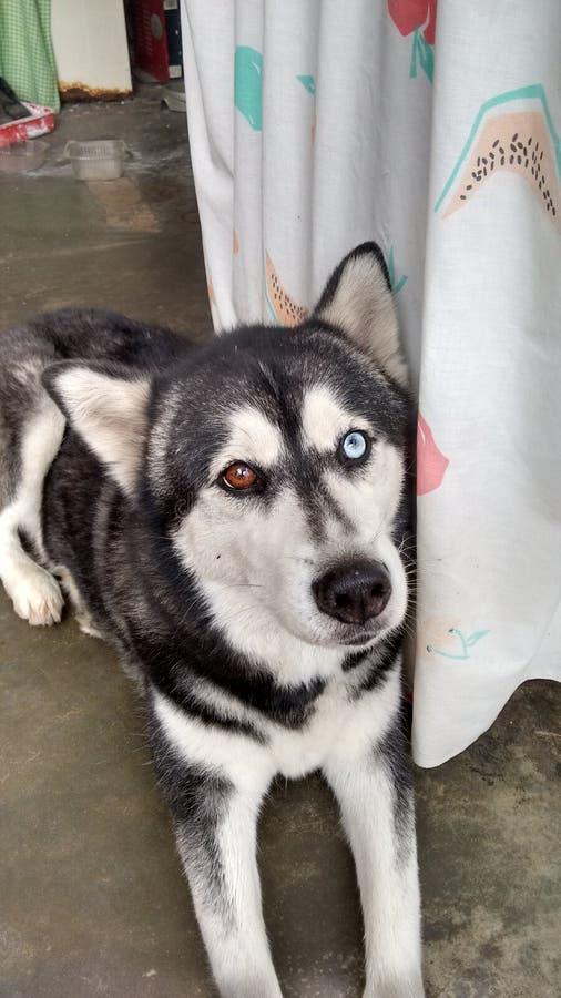 Το σκυλί: Maya στοκ φωτογραφίες