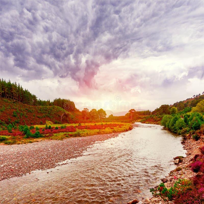 Το σκωτσέζικο τοπίο τοπίων με την ιώδη ερείκη ανθίζει και στοκ φωτογραφίες με δικαίωμα ελεύθερης χρήσης