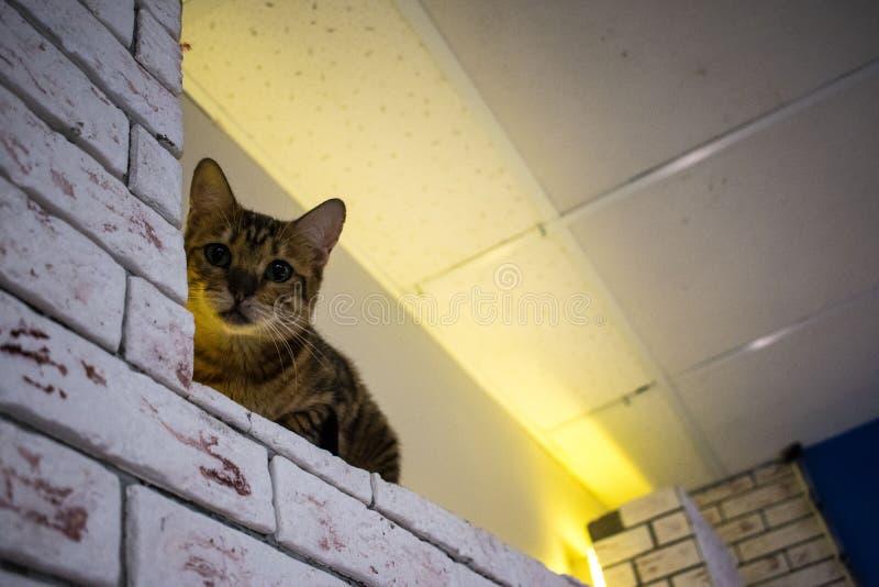Το σπίτι γατών ` s στοκ φωτογραφία