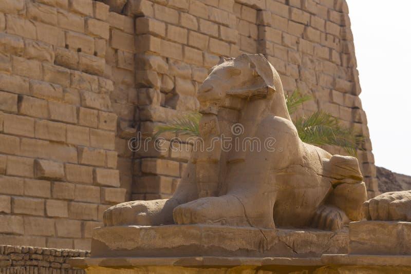 Το στενό των Σφίγγων με κεφάλι κριού Ναός Καρνάκ Λουξεμβούργο, Αίγυπτος στοκ εικόνες με δικαίωμα ελεύθερης χρήσης
